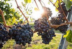 A la découverte du vin : 10 châteaux et lieux mythiques à visiter